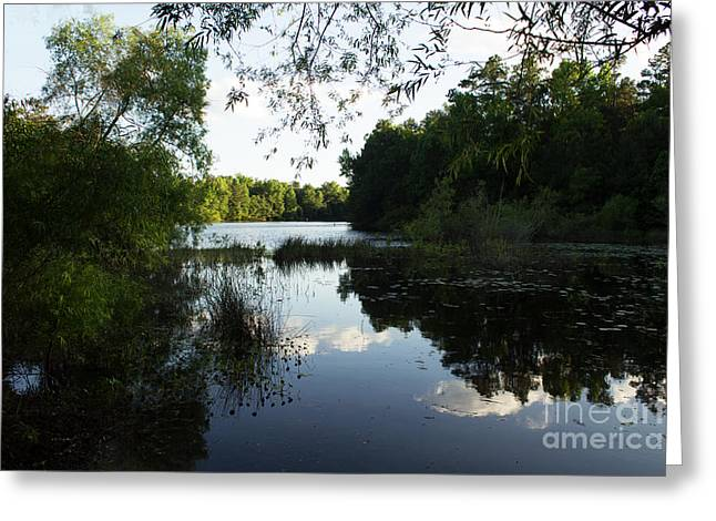Canoe Photographs Greeting Cards - Campbell Pond -Sumter South Carolina Greeting Card by Sandra Clark