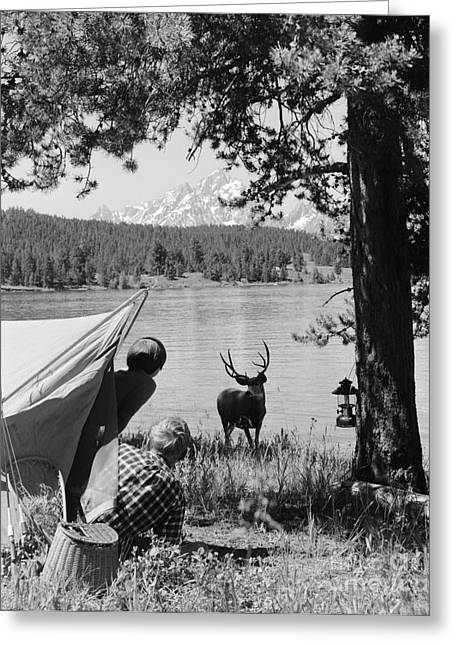Deer Camp Greeting Cards - Campers And Deer, C.1960s Greeting Card by D. Corson/ClassicStock