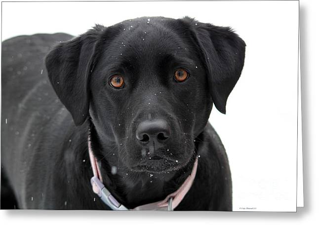 Dog In The Snow Greeting Cards - Can I Come In Greeting Card by Cathy  Beharriell