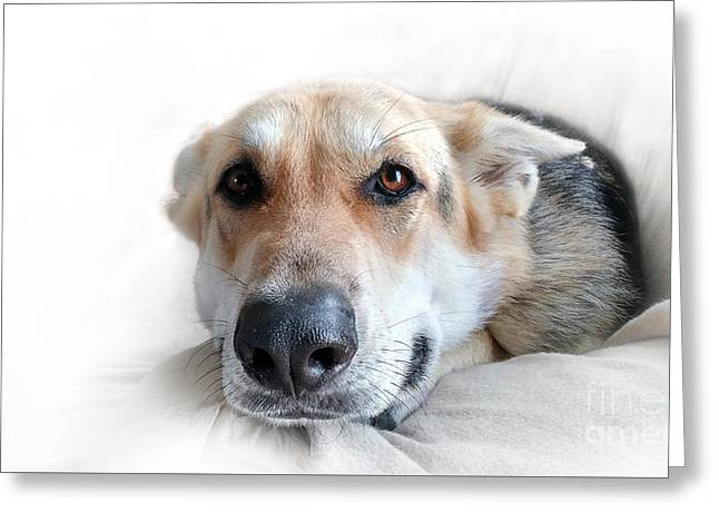 Puppies Photographs Greeting Cards - Can I Stay Here Greeting Card by E B Schmidt