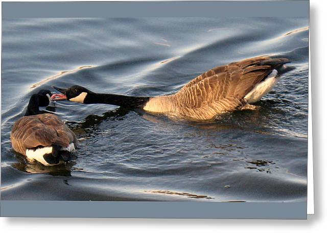 Pond In Park Greeting Cards - Can You Hear Me NOW Greeting Card by Lori Pessin Lafargue
