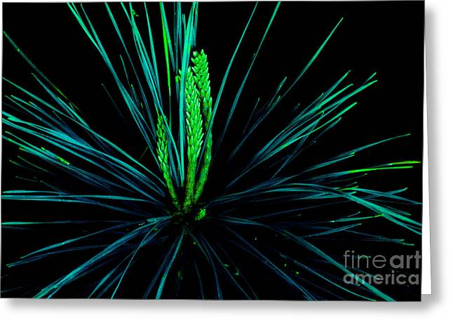 Pine Needles Greeting Cards - Can You Hear Their Whispers Greeting Card by Michael Eingle