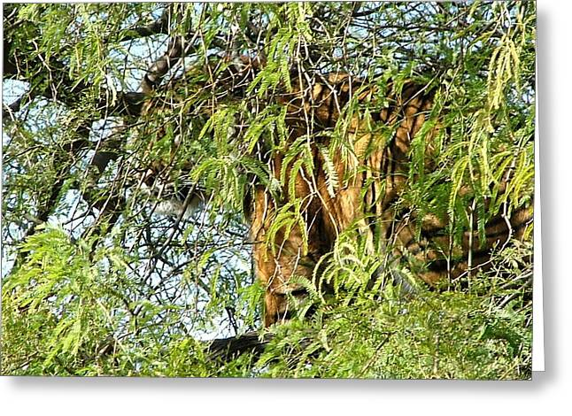Large Cats Greeting Cards - Can you see me........ Greeting Card by Nick Gustafson