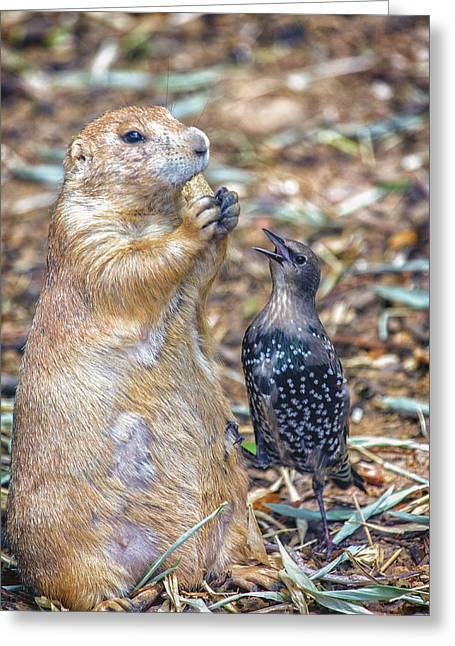 Prairie Dogs Greeting Cards - Can You Spare A Nut? Greeting Card by Bill Tiepelman