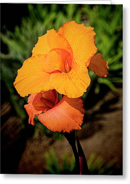 Cana Lily 2 Mission Bay Greeting Card by Kenneth Roberts