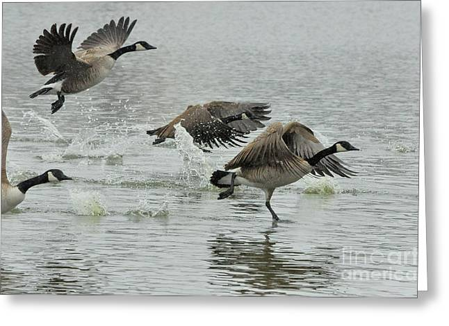 Recently Sold -  - Winter Storm Greeting Cards - Canada Geese Taking Flight in Snow storm Greeting Card by Merrimon Crawford