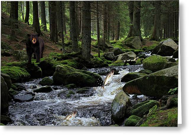 Stream Digital Greeting Cards - Canadian Forest Fishing Spot Greeting Card by Movie Poster Prints