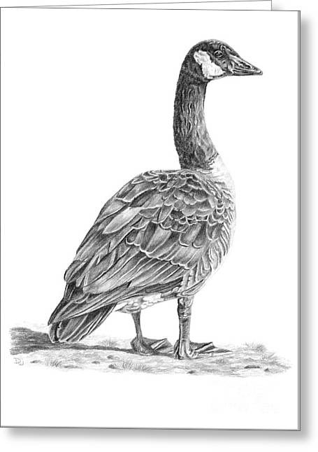 Canadian Goose Greeting Card by Pencil Paws