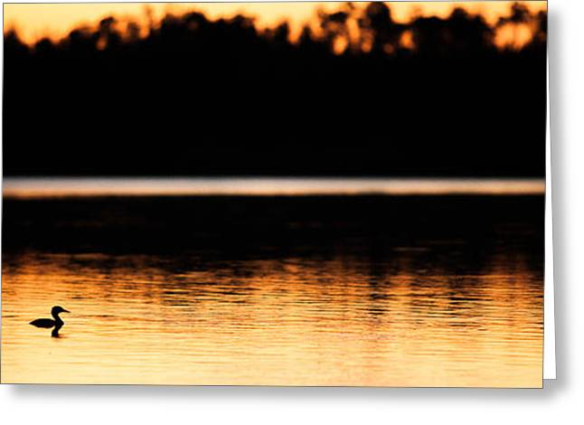 Canadian Wilderness Greeting Cards - Canadian Loon Sunset 2 Greeting Card by Ian MacDonald
