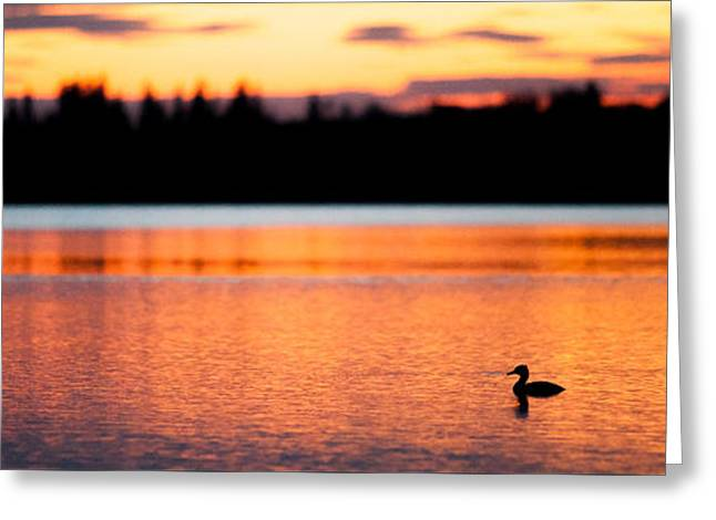 Canadian Wilderness Greeting Cards - Canadian Loon Sunset 1 Greeting Card by Ian MacDonald