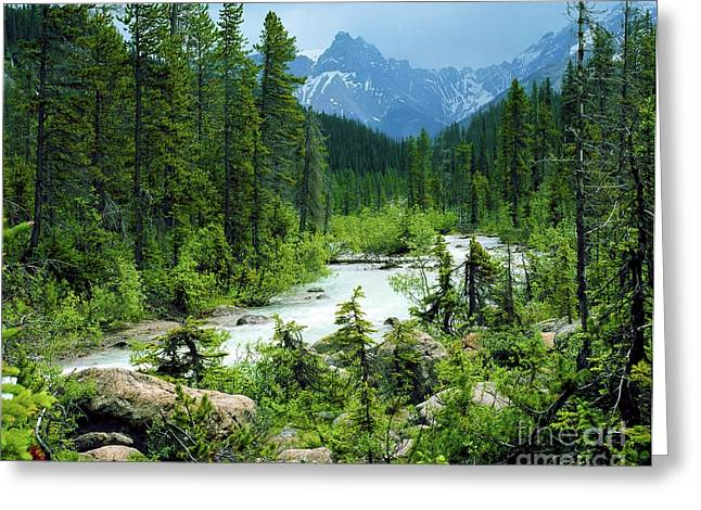 Canadian Rockies Greeting Card by Crystal Garner