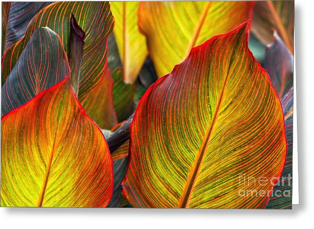 Canna Beleave The Colors Greeting Card by Gary Holmes