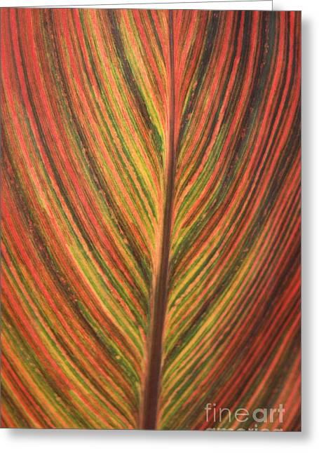 Canna Leaf Greeting Card by Patrick  Short