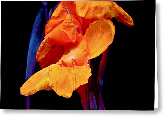 Canna Lilies on Black With Blue Greeting Card by Mother Nature