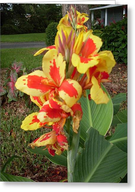 Canna Lily 2 Greeting Card by Warren Thompson