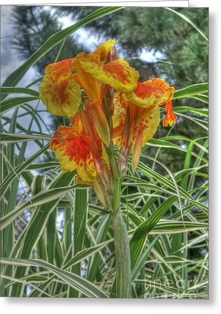 Canna Photographs Greeting Cards - Canna Lily Greeting Card by David Bearden