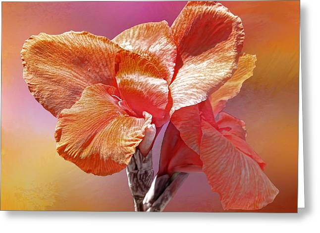 Canna Lily Greeting Card by HH Photography of Florida