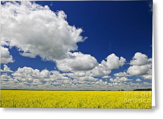 Prairies Greeting Cards - Canola field Greeting Card by Elena Elisseeva