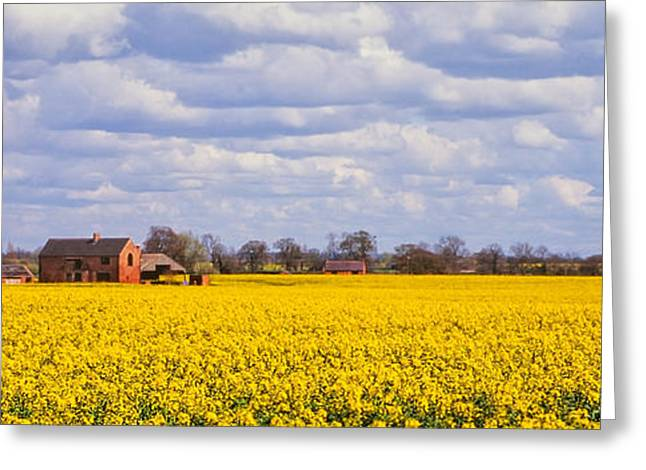 Brassica Greeting Cards - Canola field Greeting Card by John Edwards