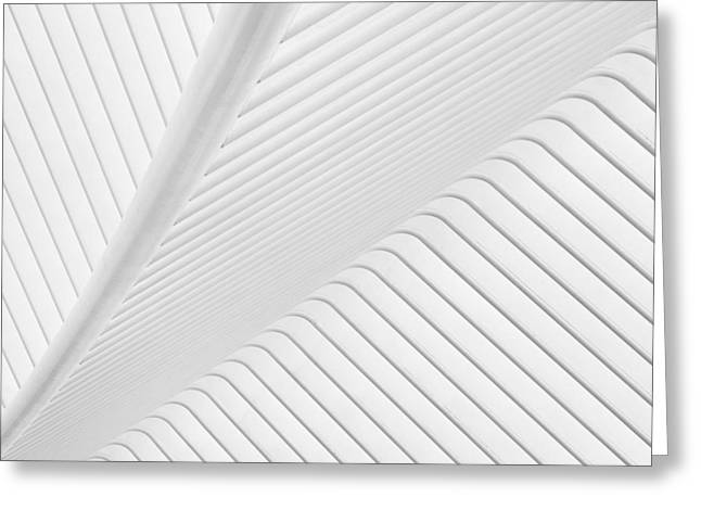 Modern Photographs Greeting Cards - Canopy. Greeting Card by Greetje Van Son