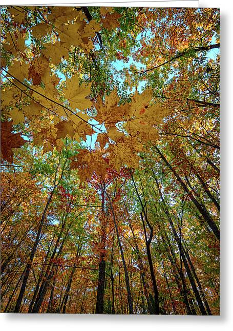 Canopy Of Color Greeting Card by Rick Berk