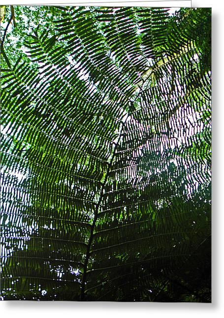 Green Foliage Greeting Cards - Canopy of Ferns Greeting Card by Elizabeth Hoskinson