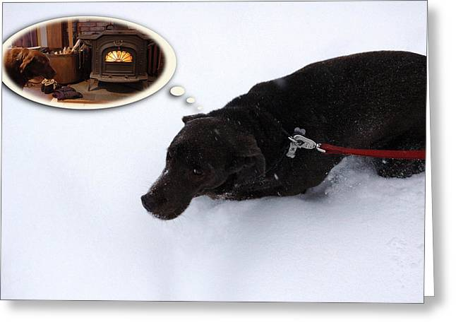 Chocolate Lab Greeting Cards - Cant Wait Greeting Card by Ross Powell