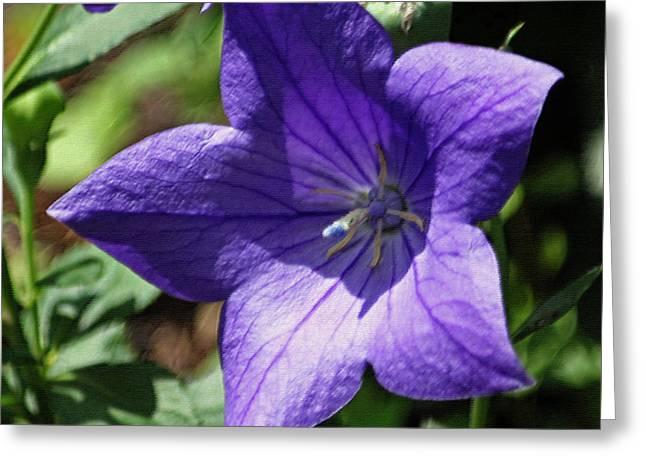 Floral Digital Art Greeting Cards - Campanula Squared in Pastel Greeting Card by Suzanne Gaff