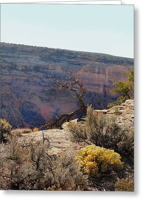 Carefree Cowboy Greeting Cards - Canyon Scrub Greeting Card by Gordon Beck