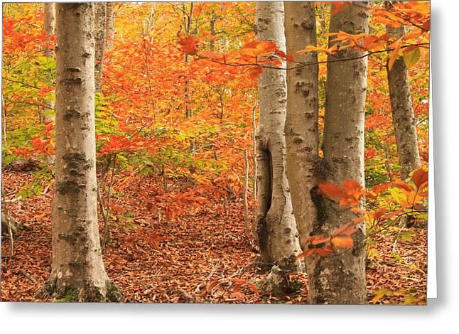 Cape Cod Foliage Greeting Card by John Burk
