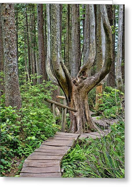 Cape Flattery Walkway Greeting Card by Dan Sproul