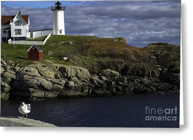 Cape Neddick Greeting Cards - Cape Neddick Lighthouse Greeting Card by Mim White