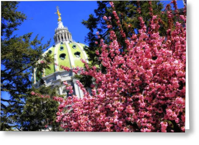 Conifer Tree Greeting Cards - Capitol in Bloom Greeting Card by Shelley Neff