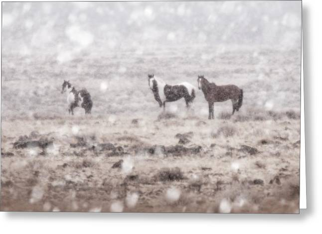 The Horse Greeting Cards - Captain in Winter Greeting Card by Tracy Mohr