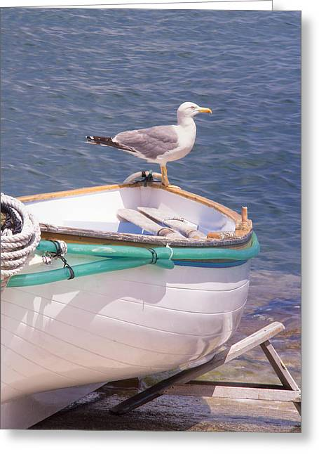 Sea Birds Greeting Cards - Captain Seagull  Greeting Card by Daphne Sampson