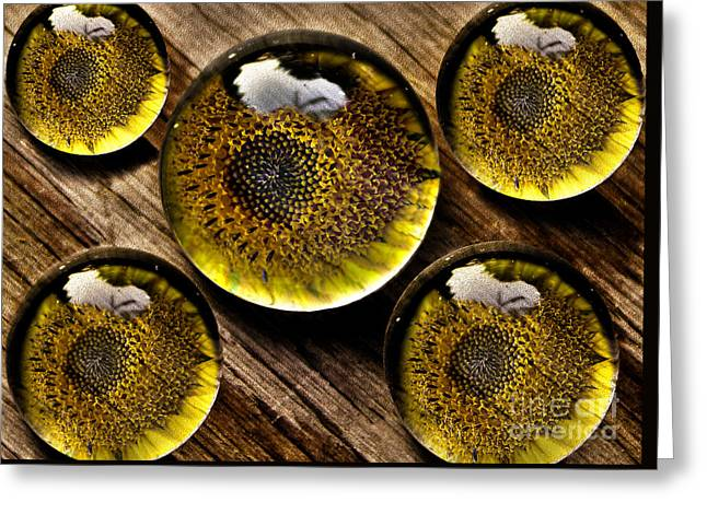 Yellow Sunflower Greeting Cards - Captured Under Glass Series Group Two Greeting Card by Nina Silver