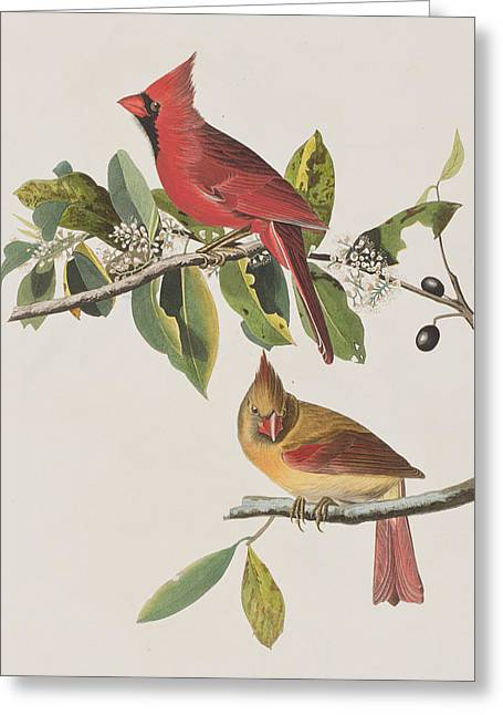 Recently Sold -  - Berry Greeting Cards - Cardinal Grosbeak Greeting Card by John James Audubon
