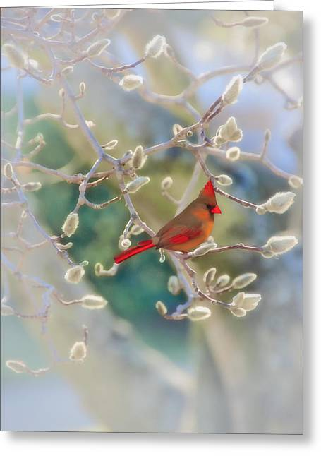 Cardinal In The Pussy Willows Greeting Card by Tom York Images