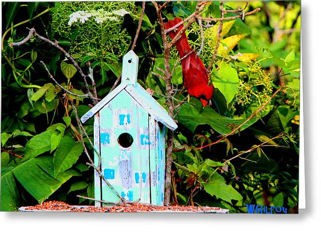 Titusville Greeting Cards - Cardinal Greeting Card by W Gilroy