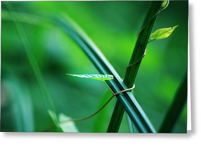 Botanical Greeting Cards - Carex magic opus 28   Bound together Greeting Card by Philippe Meisburger