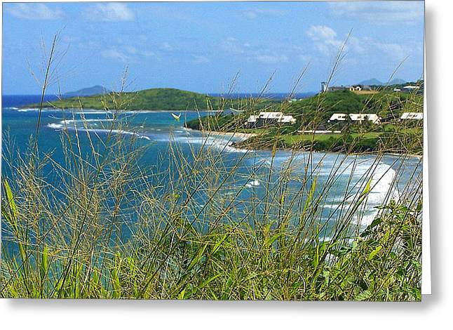 Willow Lake Greeting Cards - Caribbean Queen Greeting Card by Frozen in Time Fine Art Photography
