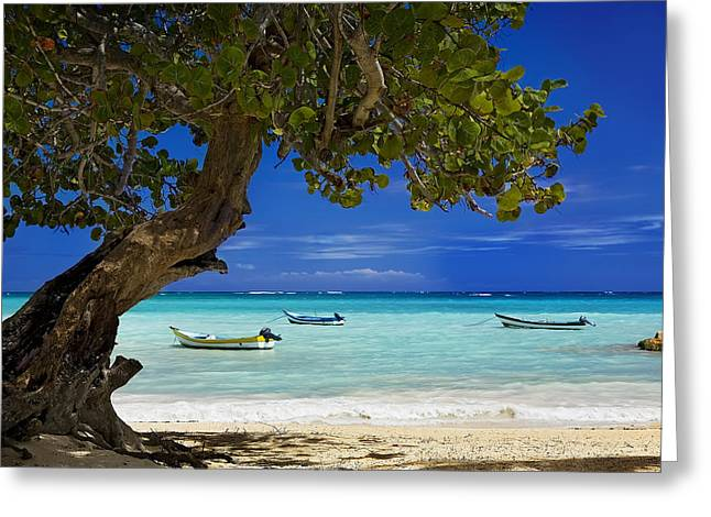 Blue Grapes Greeting Cards - Caribbean Tranquility Greeting Card by Scott Baker