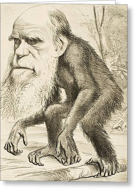 Famous Person Drawings Greeting Cards - Caricature of Charles Darwin Greeting Card by English School