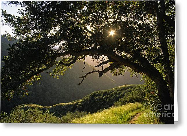 Craig Lovell Greeting Cards - Carmel-valley-32-20 Greeting Card by Craig Lovell