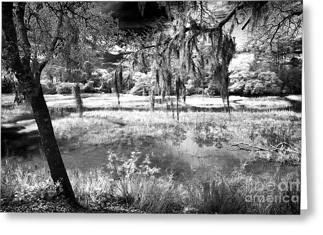 South Carolina Infrared Landscape Greeting Cards - Carolina Swamp Greeting Card by John Rizzuto