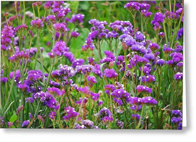 Rincon Point California Greeting Cards - Carpinteria Central Coast Wildflowers Greeting Card by Kyle Hanson