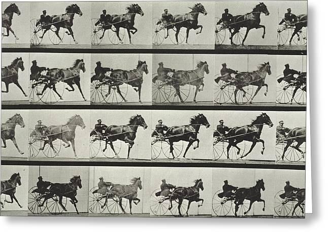 Carriage Driving Greeting Card by Eadweard Muybridge