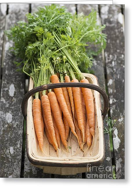 Home Grown Greeting Cards - Carrots Greeting Card by Tim Gainey