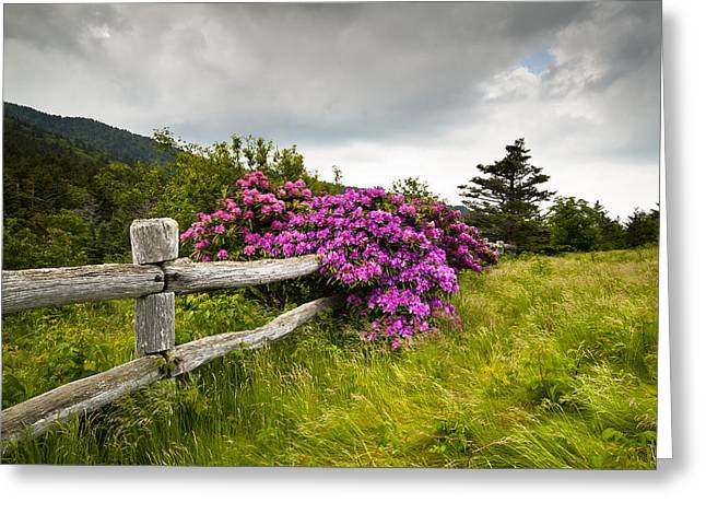 Carver Greeting Cards - Carvers Gap Roan Mountain State Park Highlands TN NC Greeting Card by Dave Allen