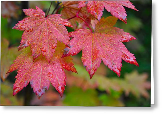 Cascade Autumn Leafs 5 Greeting Card by Noah Cole